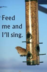 Singing Bird Feeder