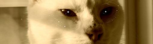 Cat edited