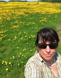 Dandelions sunshine