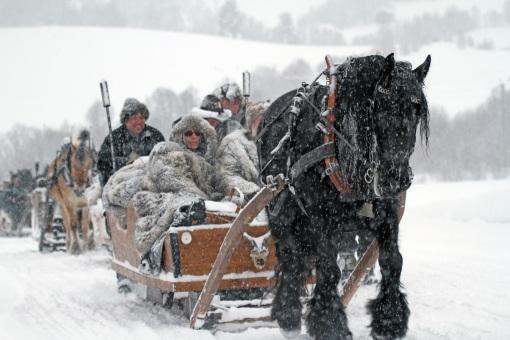 Winter horses travelling