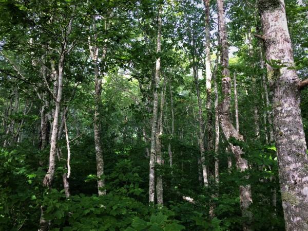 Jodrey Hiking Trail Blomidon